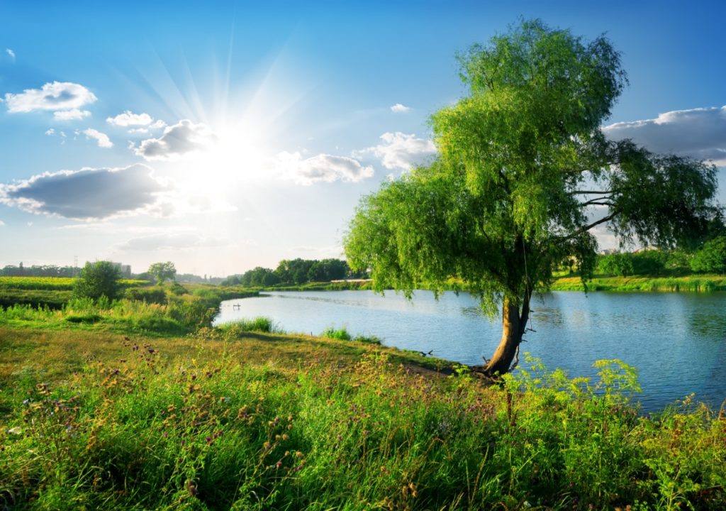 tree-planted-by-river
